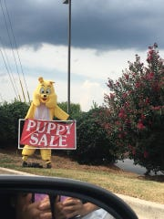 "The Puppy Zone's ""Puppy Sale"" sign is often situated in front of the Kingston Pike storefront."