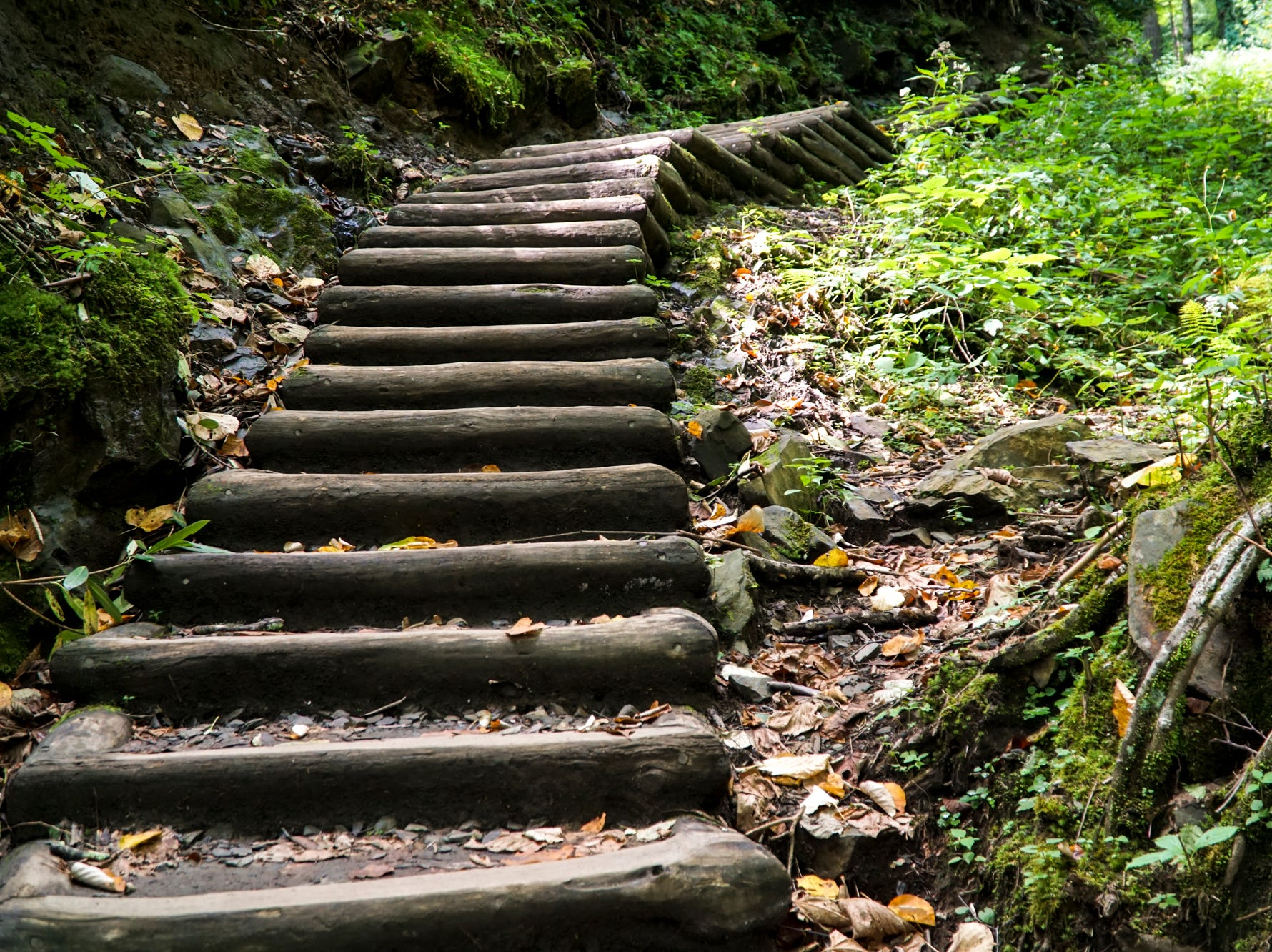 Hundreds of wooden stairs line the Chimney Tops trail, which climbs over 1400 feet.