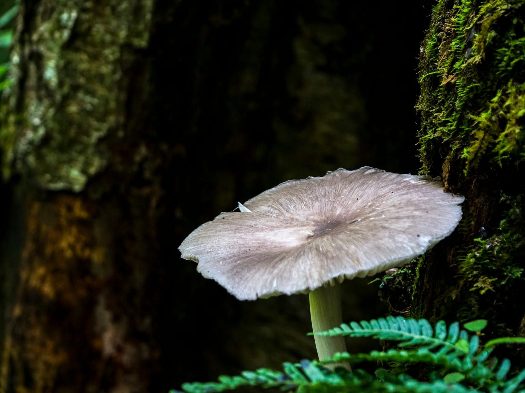 A mushroom grows in a hollow tree trunk along the Chimney Tops trail in the Great Smoky Mountains National Park.