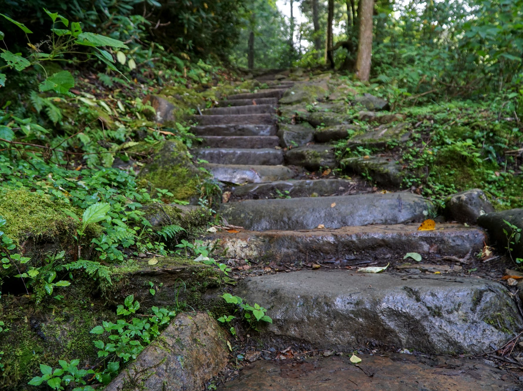 Stone stairs make for a moderately challenging climb of the Chimney Tops trail, despite its short length of just under 3.5 miles.
