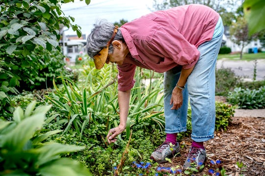 Bille Piazza, 76, picks weeds out of her alternative lawn in the front of her home on Friday, Sept. 7, 2018, in Lansing.