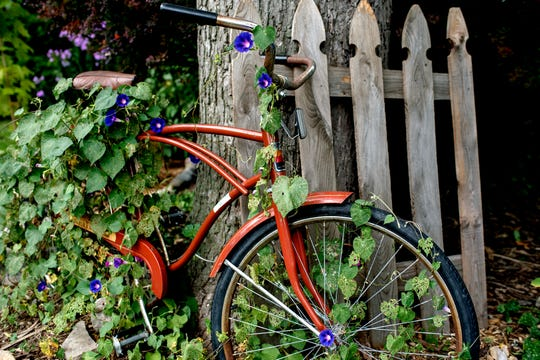 An old bicycle is covered with plants in the front yard of Martha Hellen Kwant's home on Friday, Sept. 7, 2018, in Lansing.