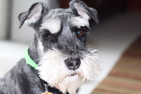Despite his stern visage, Henry is a beloved member of his family. He also was chosen for the 2019 West Allis Wags calendar.