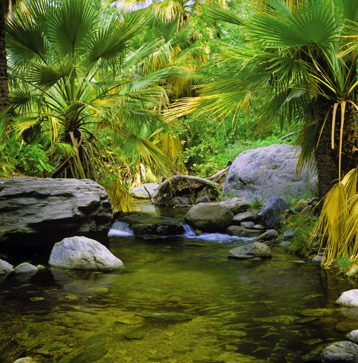 Stream and palms in Andreas Canyon
