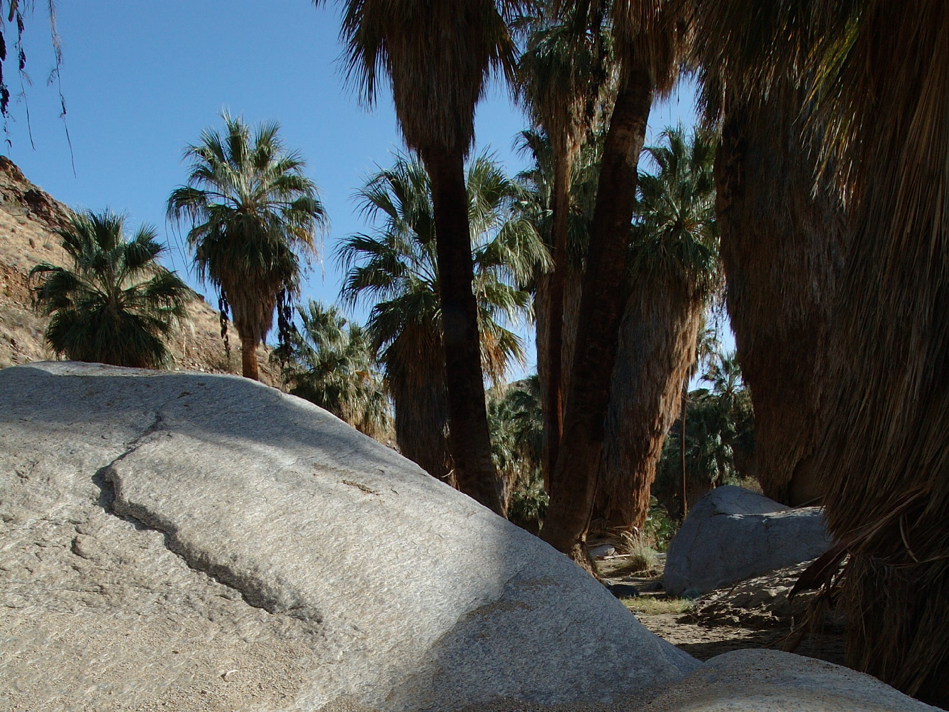 Bedrock mortar in Palm Canyon