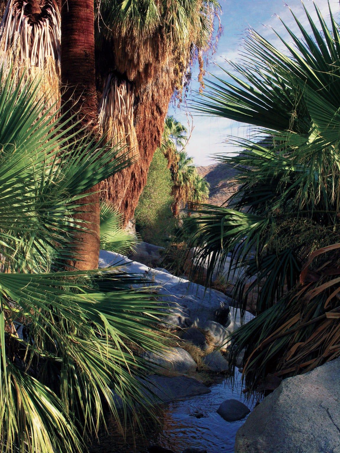 Lower Palm Canyon