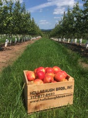 Hollabaugh Bros. apple orchard has been in business since 1955.