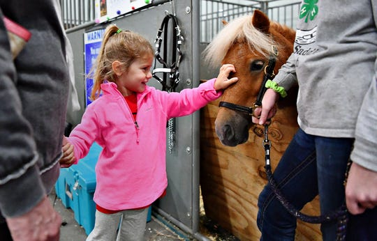 Treva Welty, left, of Chanceford Township, and Cassie McQuait, 14, right, of Newberry Township, look on as Welty's great-granddaughter Miya Welty, 3, pets Charlie, a four-year old miniature pony during York Fair in West Manchester Township, Tuesday, Sept. 11, 2018. Dawn J. Sagert photo