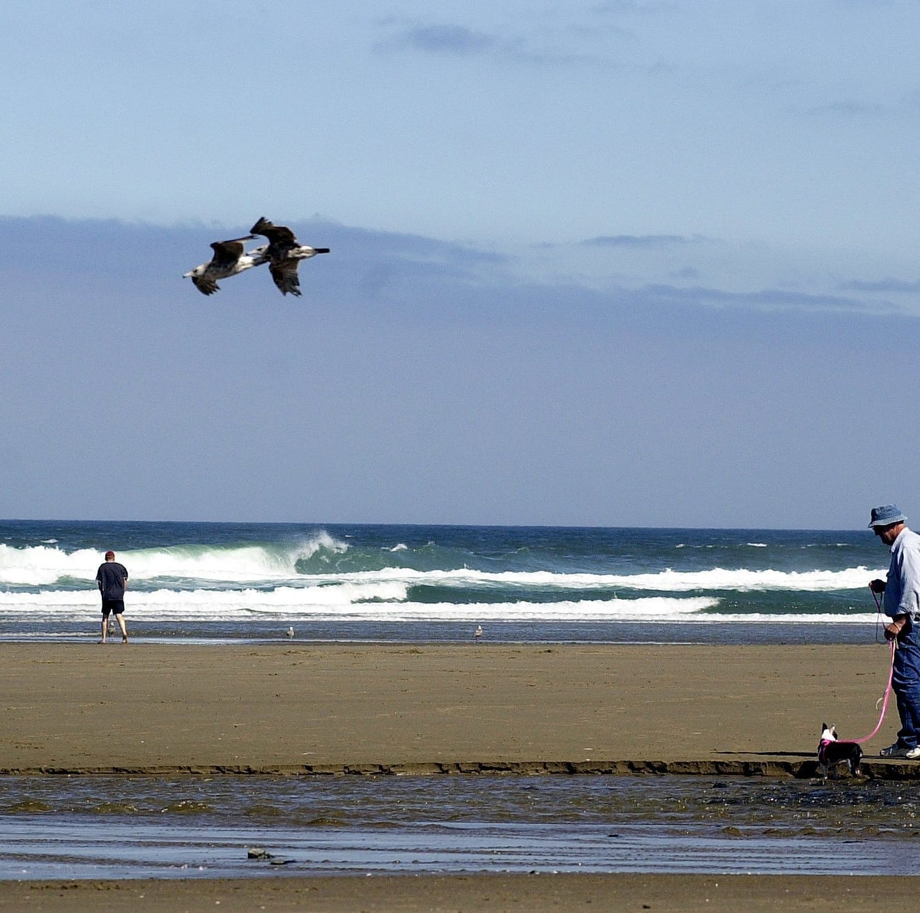 Health advisory issued for D River Beach in Lincoln City