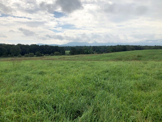 The property of Max Quillen and his family outside of Lyndhurst where a solar farm would be put once approved by Augusta County. Quillen and his family own Waynesboro Nurseries.