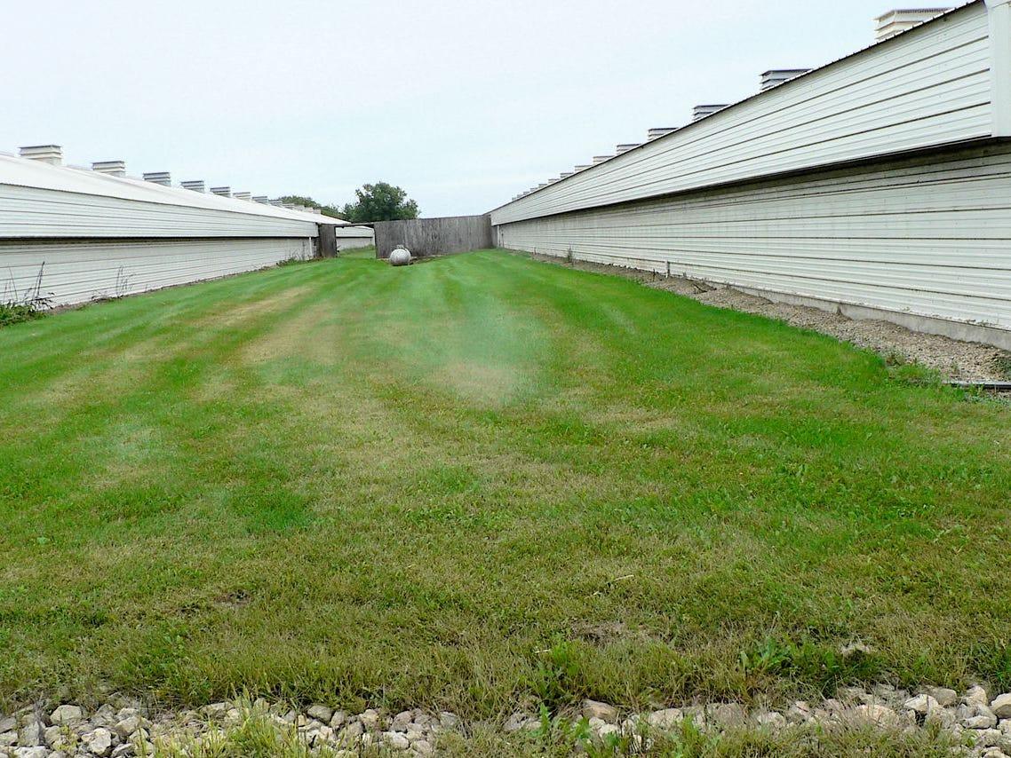 Mayr Farm has two laying houses each 600 feet long.
