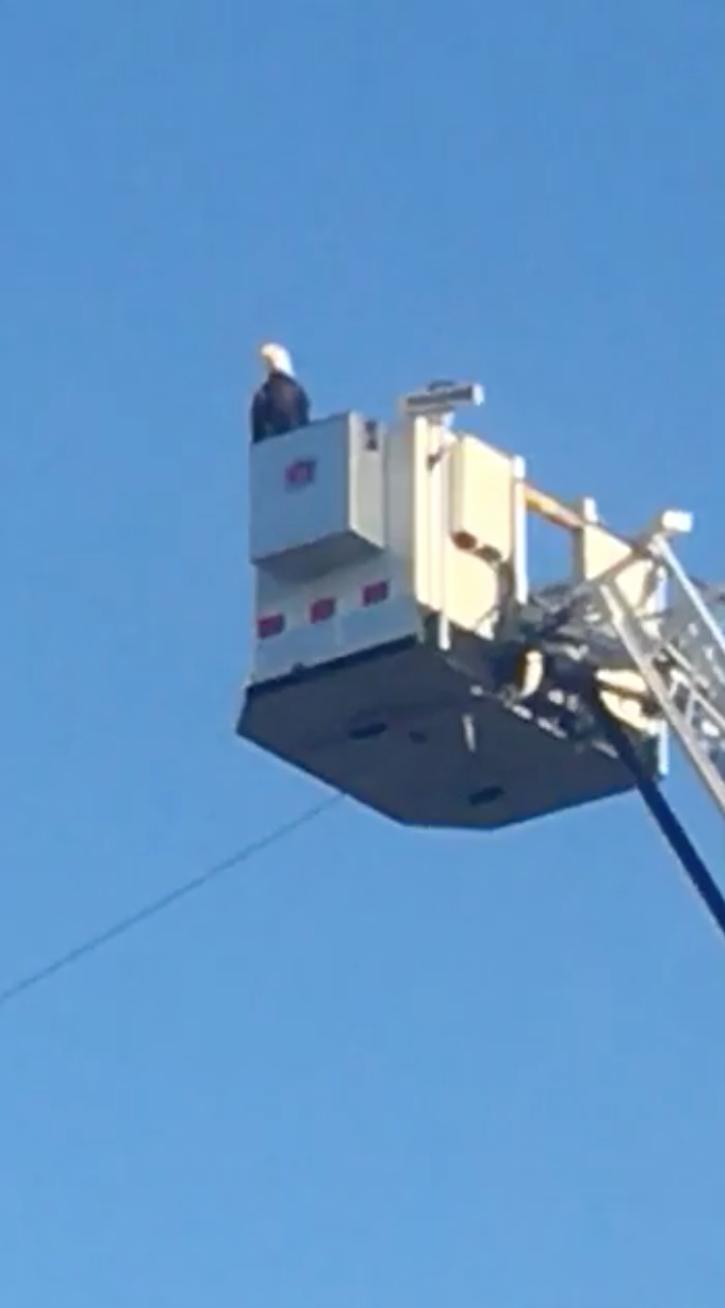 'Unbelievable': Bald eagle lands on firetruck's 9/11 flag display