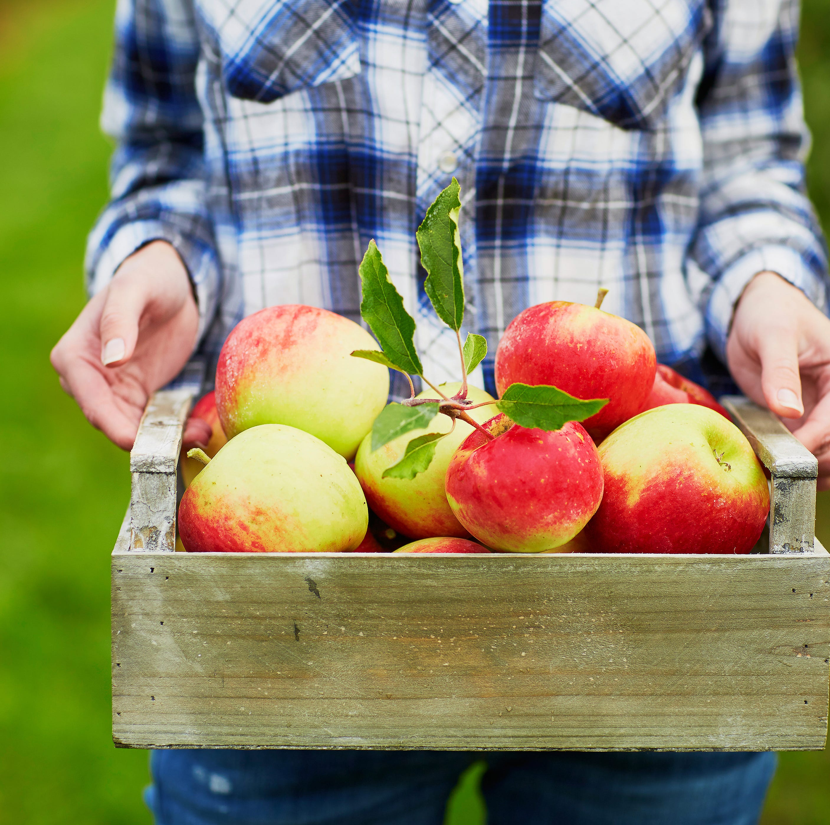 Guide to apple orchards and cider mills in southeast Michigan