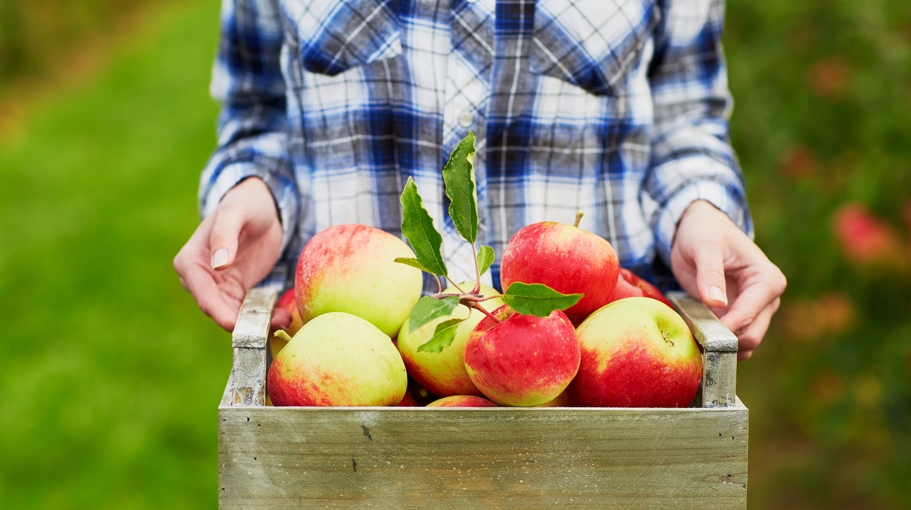 Plymouth Orchard and Cider Mill won't open this season, cites COVID-19