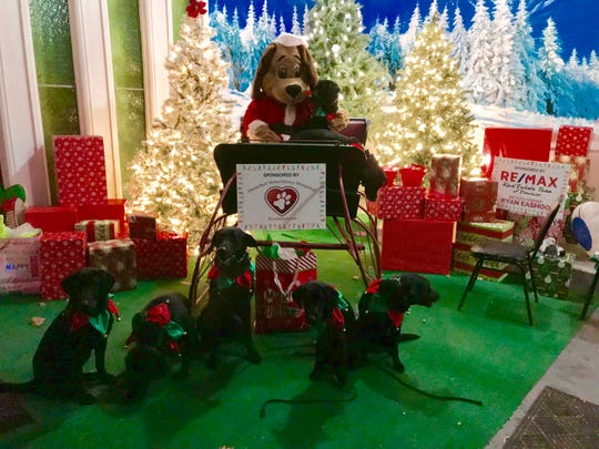 Dogs at the Tails and Trails of Lights in Davison Township, Michigan.