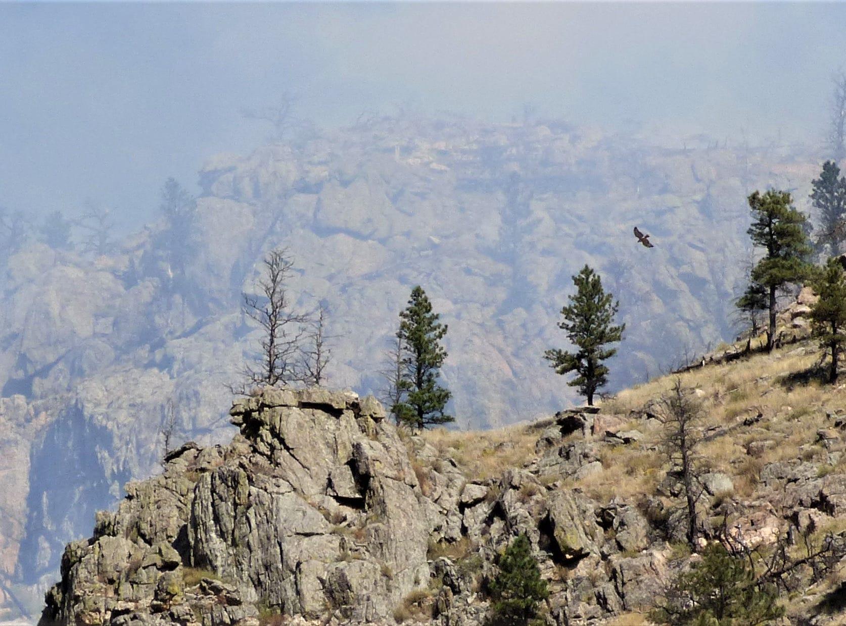 A bird flies around the Seaman Fire burn area.