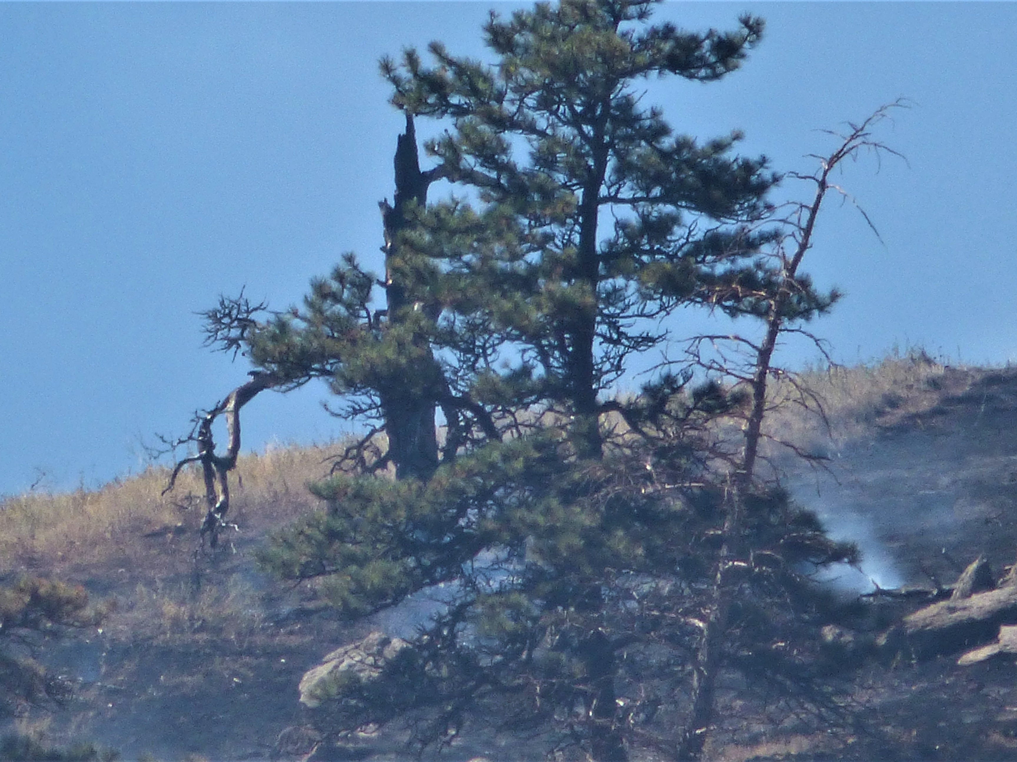 A firefighter digs while working the Seaman Fire.