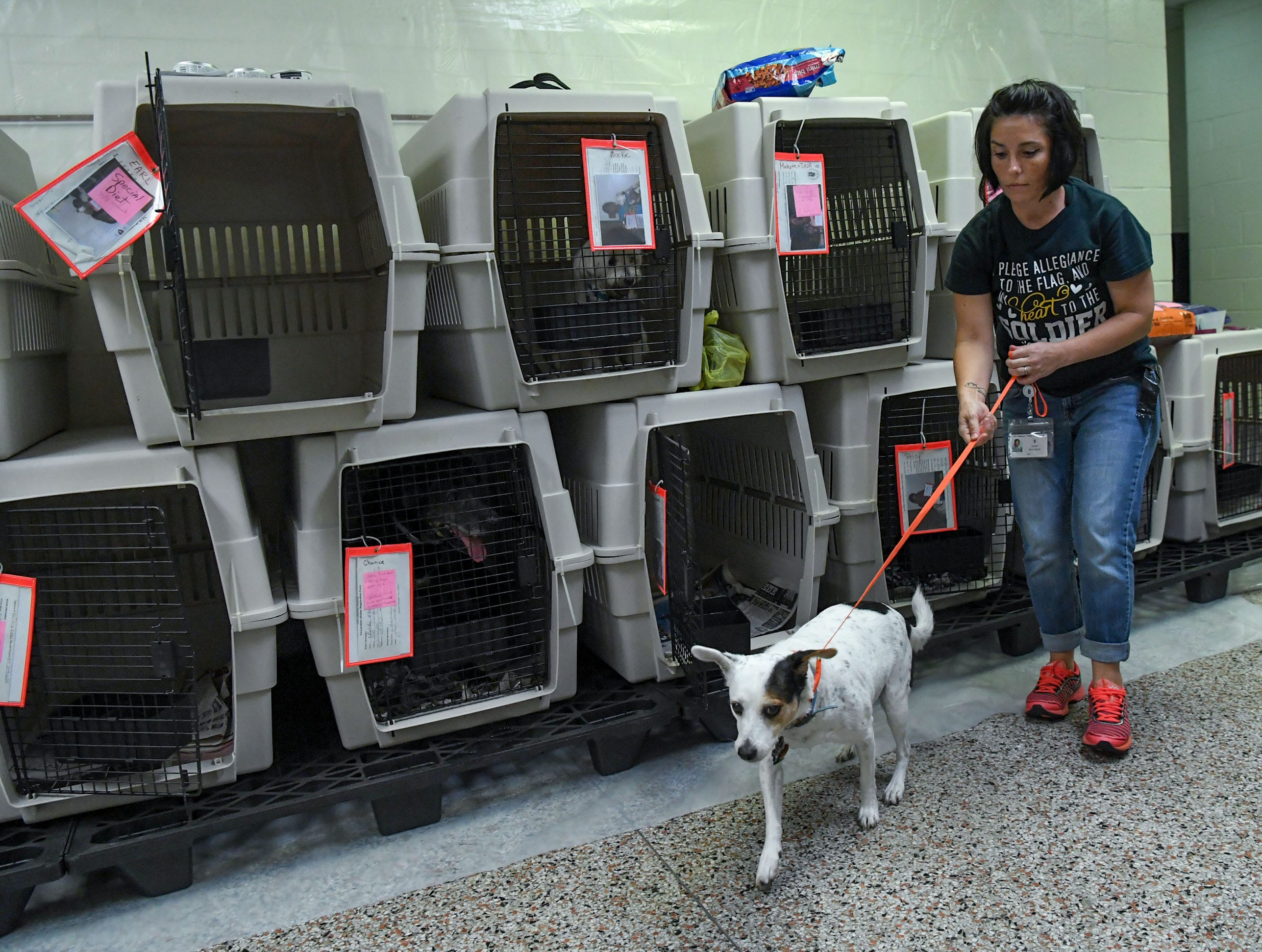 Jaime Waynick, an employee with New Hanover County, takes a dog for a walk at the county emergency shelter held at Trask Middle School in Wilmington, North Carolina on Tuesday, September 11, 2018. Hurricane Florence is expected to make landfall in Wilmington Thursday night. (Ken Ruinard / Greenville News / Gannett USA Today Network / 2018 )