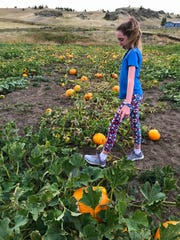 Cadence Kallenberger walks through her pumpkin patch, which has hundreds of pumpkins she's putting up for sale this weekend at a pick-your-own pumpkin sale.