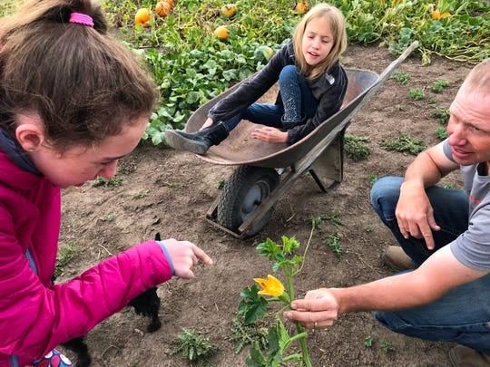 Justin Kallenberger holds a pumpkin flower while his daughter Cadence explains the flower's gender to her sister Tia in the wheelbarrow.