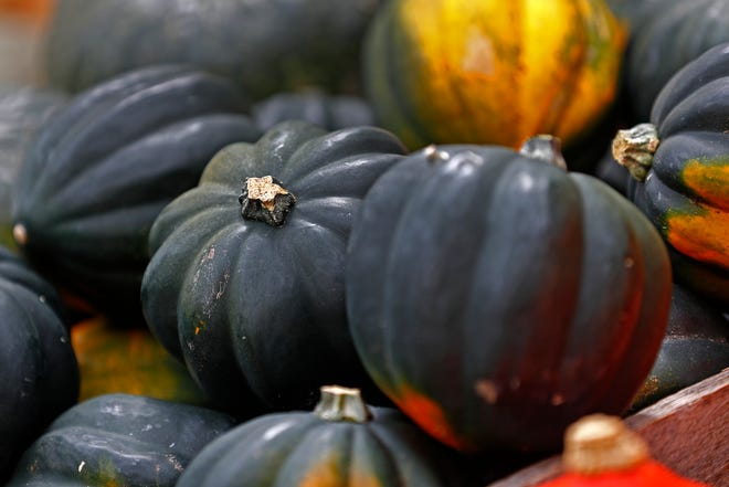 Acorn squash is ready to buy at the Original Farmers' Market by City Market, Wednesday, Sept. 12, 2018.  The market runs every Wednesday through October.