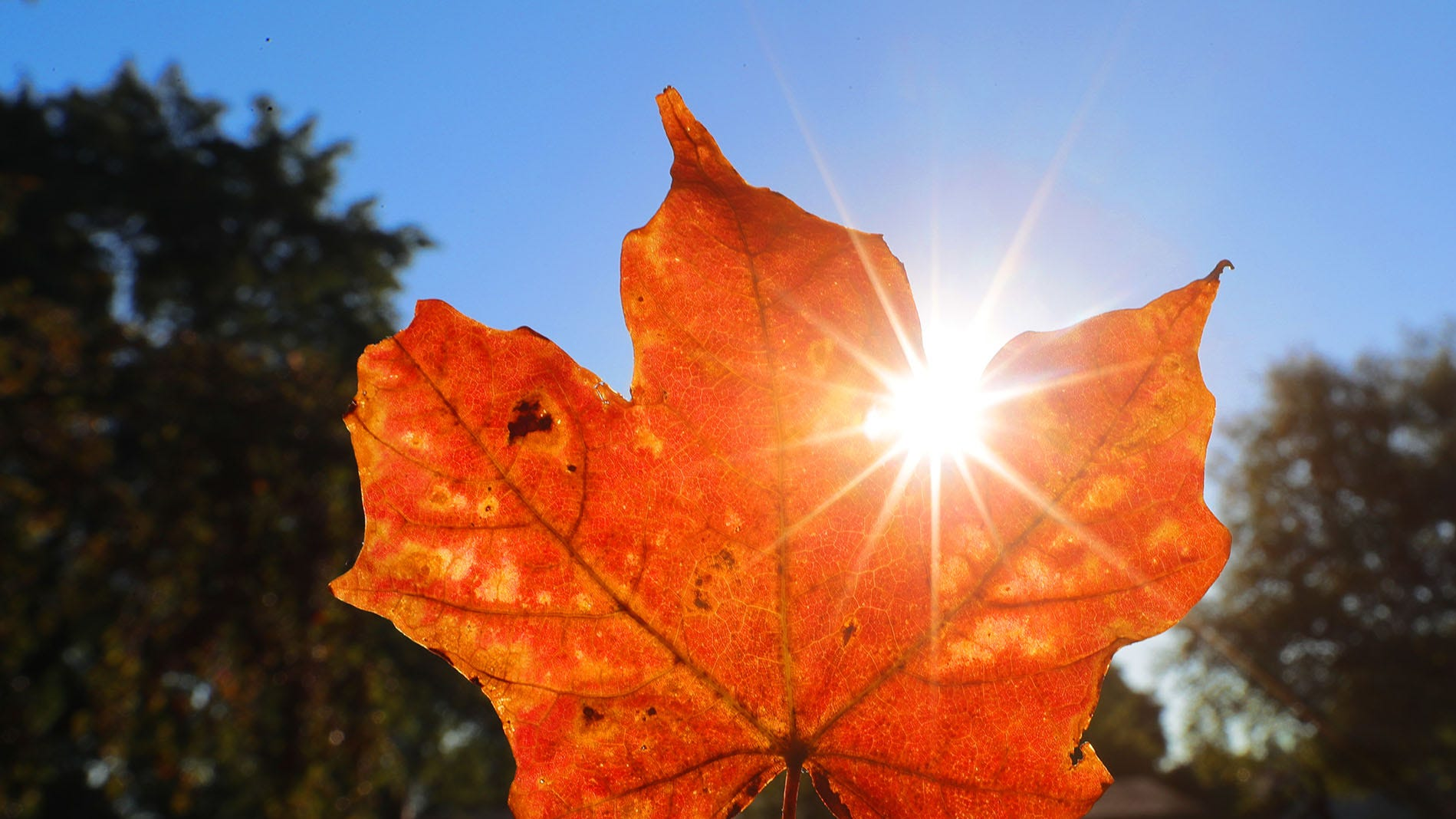 50 things to do with your kids in fall during coronavirus