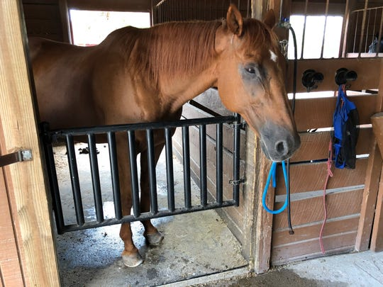 A horse rests in its stall at the Naples Therapeutic Riding Center on Wednesday, Sept. 12, 2018. This horse is one of the 12 the North Naples center has, although it has capacity for two more.