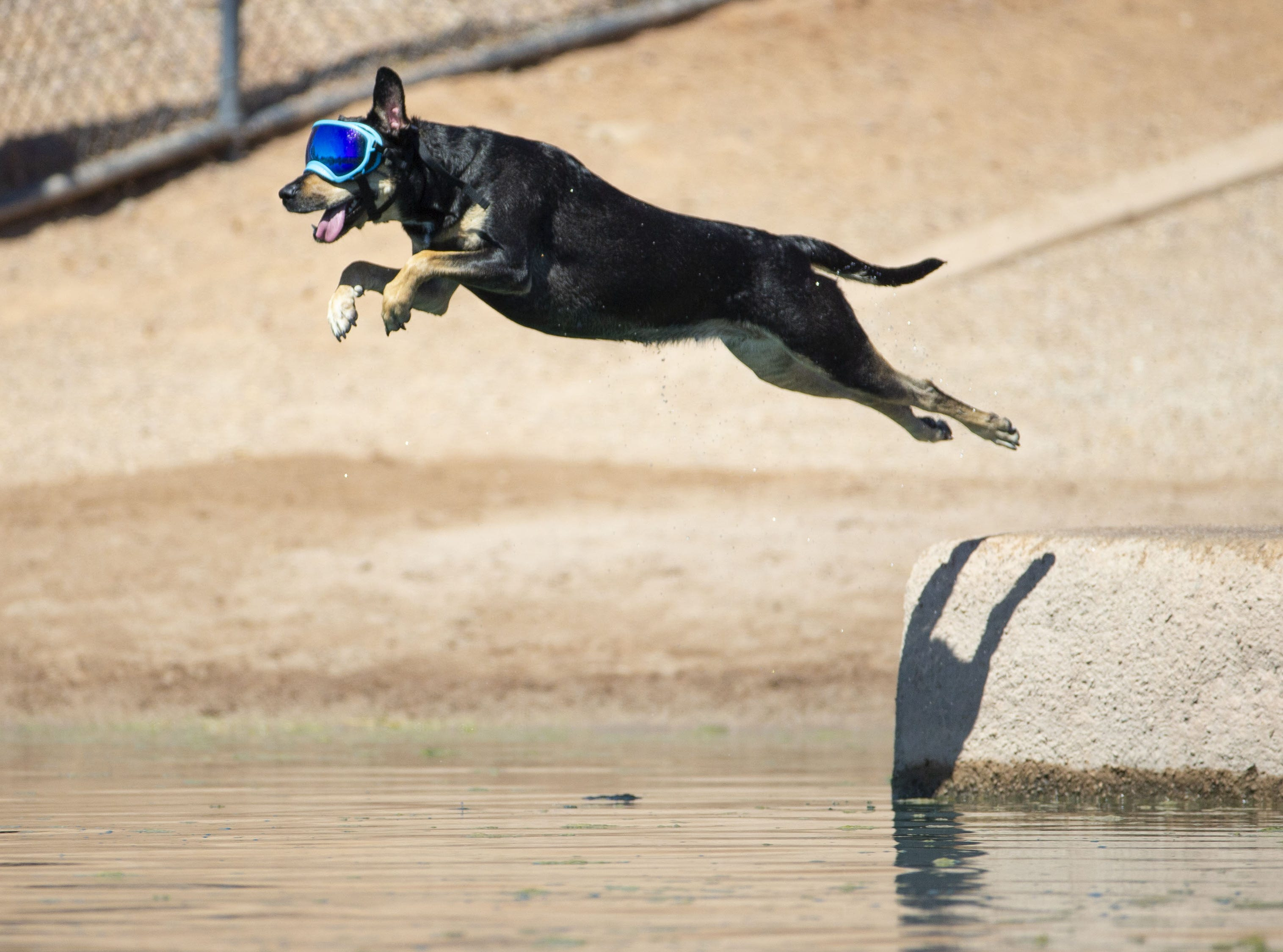 Cali, of Chandler,  cools off in the lake at  Cosmo Dog Park in Gilbert on September 13, 2018.