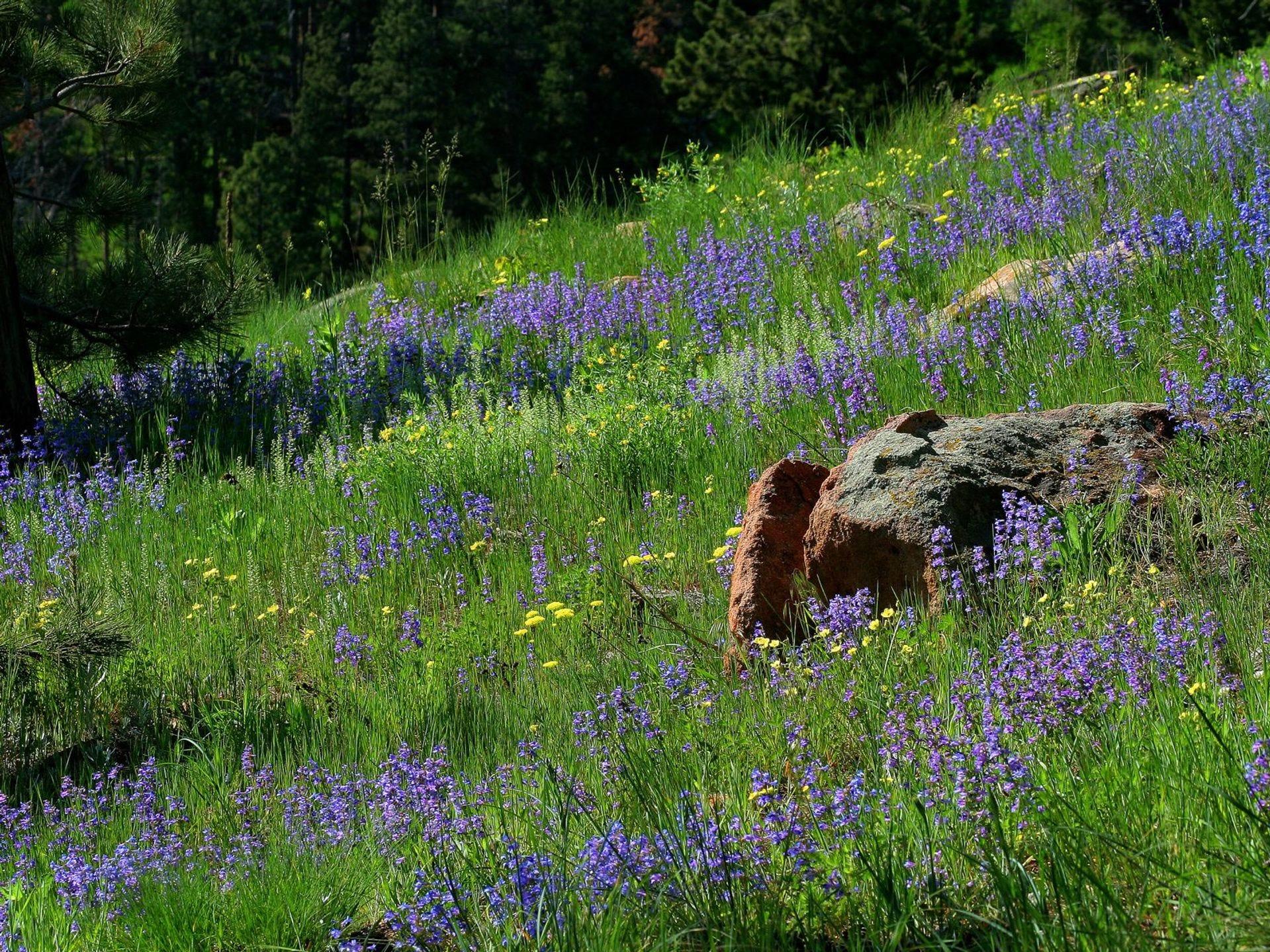 Los prados de flores silvestres son una vista común en el Borde Norte.