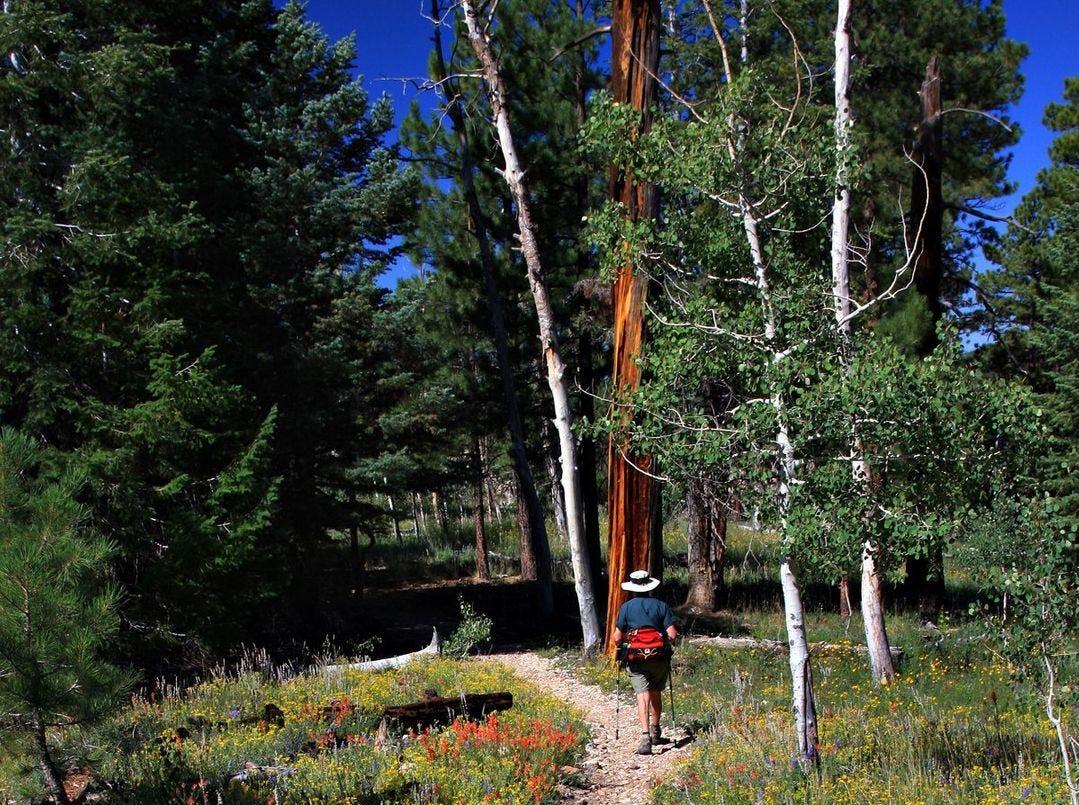Un excursionista en Widforss Trail, otro hermoso sendero del North Rim.