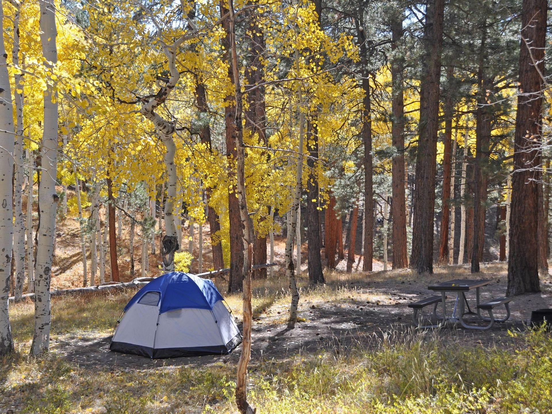 El campamento Grand Canyon North Rim está abierto desde mediados de mayo hasta mediados de octubre y es operado por el Servicio de Parques Nacionales.
