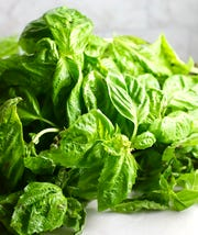 A bunch of fresh basil is ready for Easy Homemade Southern Basil Pesto.