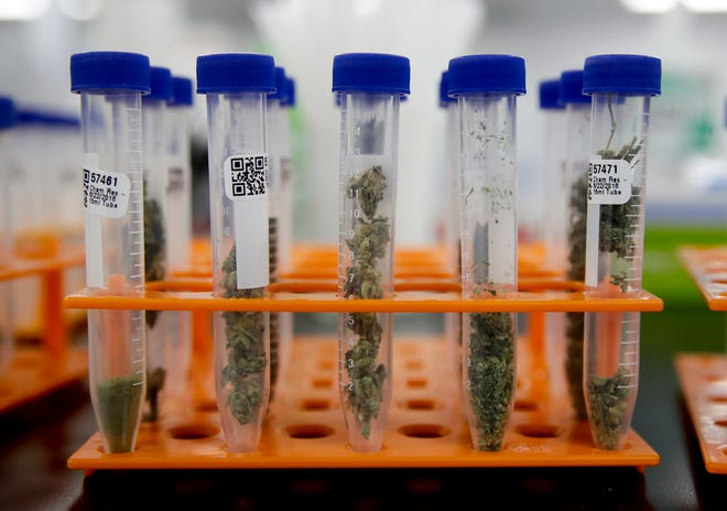 In this Aug. 22 photo, marijuana samples are organized at Cannalysis, a cannabis testing laboratory, in Santa Ana. In Oxnard, the City Council is preparing to allow one marijuana testing lab.