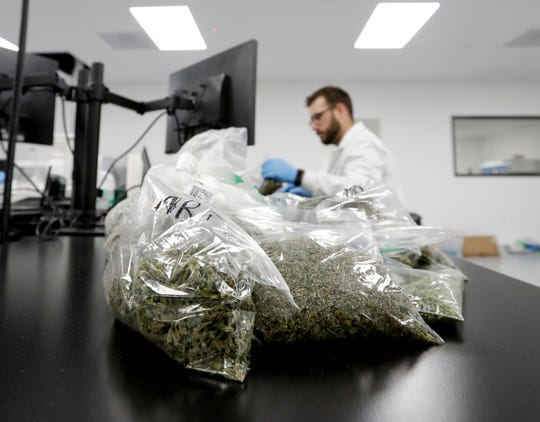 In this Aug. 22 photo, marijuana samples are piled up for testing at Cannalysis, a cannabis testing laboratory, in Santa Ana.