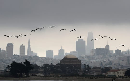 Brown pelicans fly in front of the San Francisco skyline Aug 17, 2018.