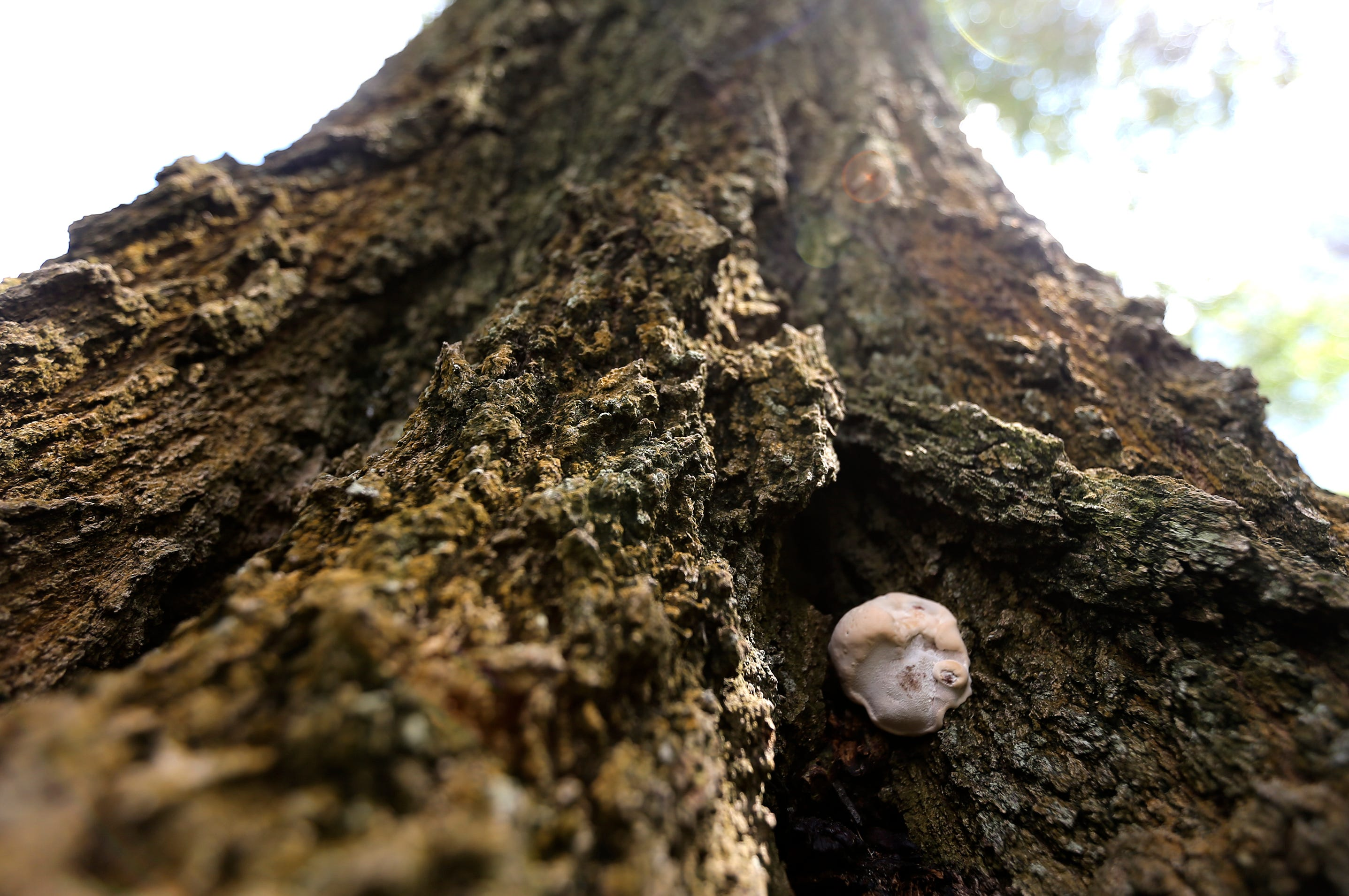 Fungus Tree Image Houston
