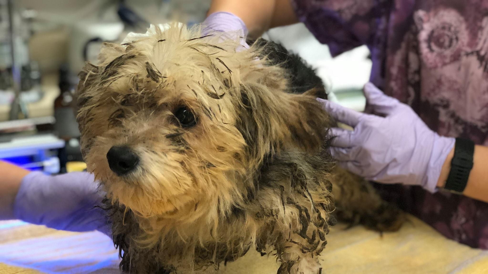 Dozens of pets found in squalid Chico house, Humane Society appeals for help