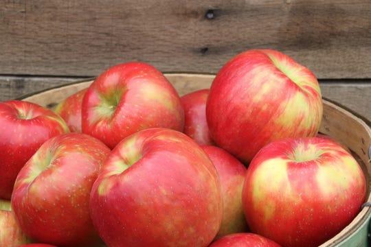 Honeycrisp apples.
