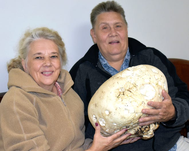 In this Sept. 4, 2018, photo, Kay and Joe Arcand of Quinnesec, Mich., pose with a massive mushroom picked in Dickinson County in Michigan's Upper Peninsula.