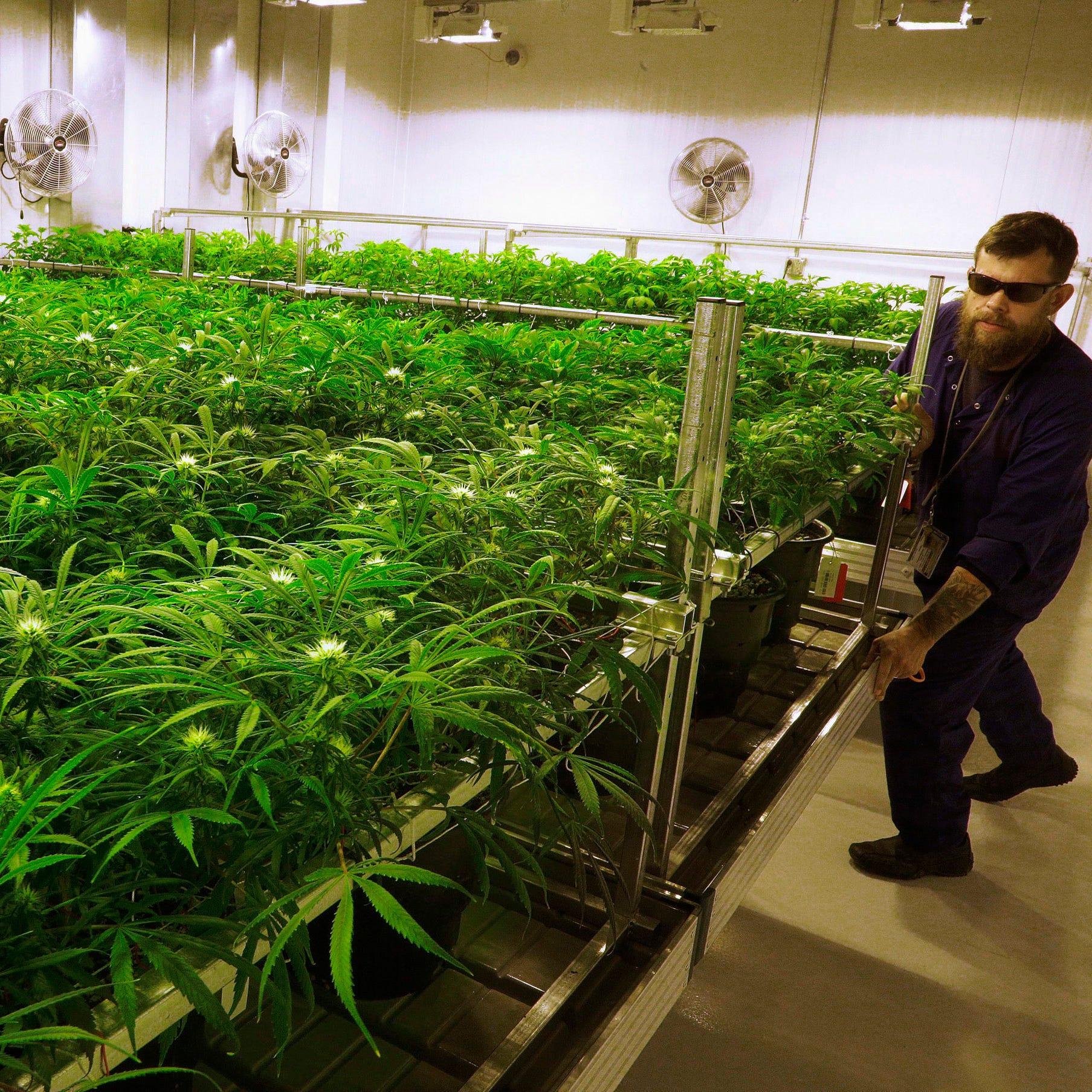 Opinion: Americans must understand marijuana danger