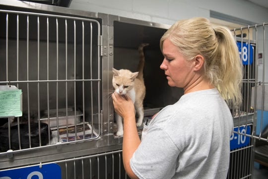 Animal Control officer trainee Therese Kocis pets her favorite cat at the Evansville Animal Care & Control shelter. Kocis has been in training for only a week.
