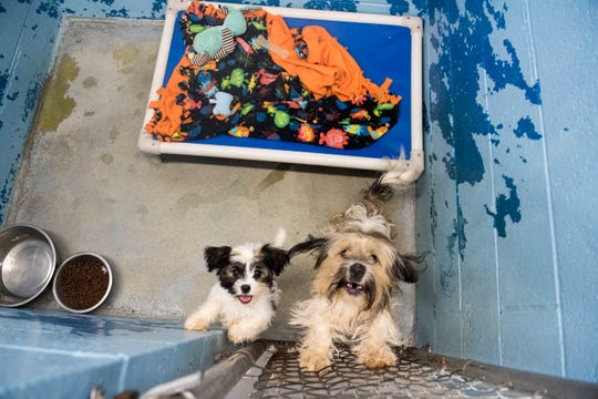 Two dogs share a cage at the Evansville Animal Care & Control shelter on Thursday, Sept. 13, 2018. They were brought in together and when separated cried for each other so workers decided to keep them together.
