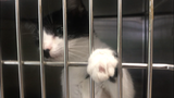Kittens and dogs from South Carolina animal shelter brought to Lee County