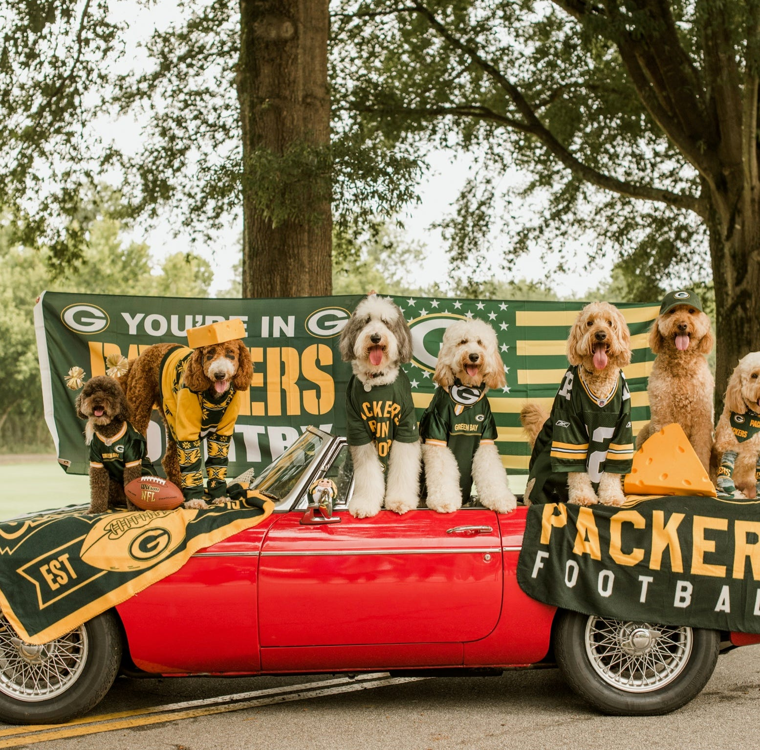 The 7 dogs in That Dood Squad get their Packers game faces on in Instagram photo