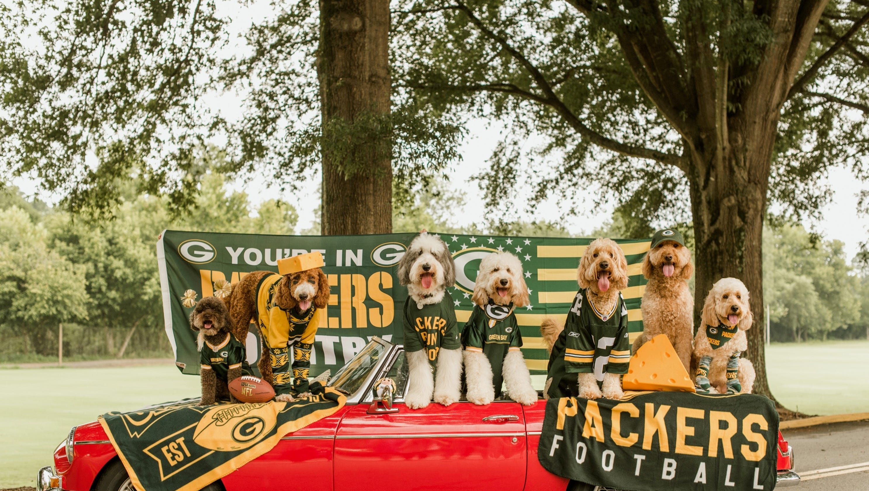 Image result for image, photo, picture, dog, packers, atlanta