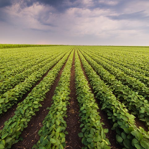 Breitinger: Soybeans swing after hitting 10-year low, oil surges ahead of OPEC meeting