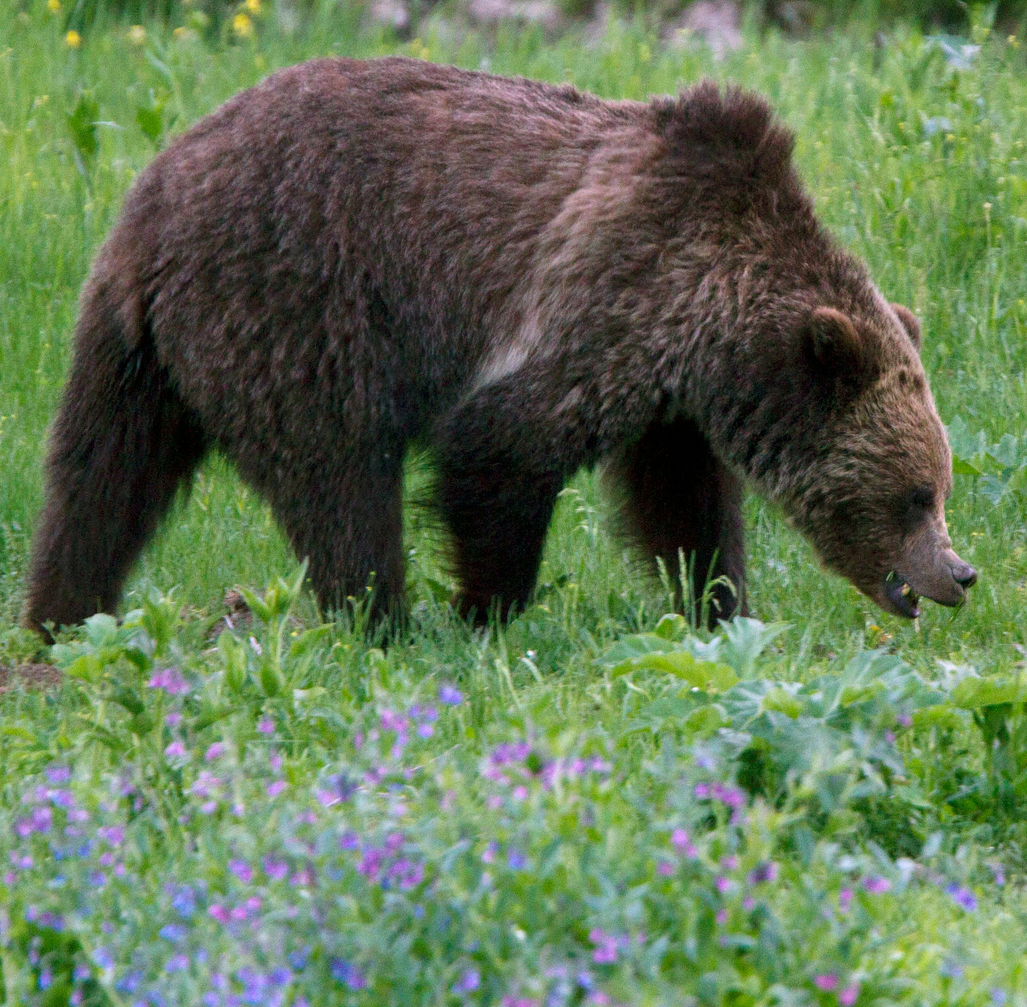 Agencies seeking information in grizzly shooting death