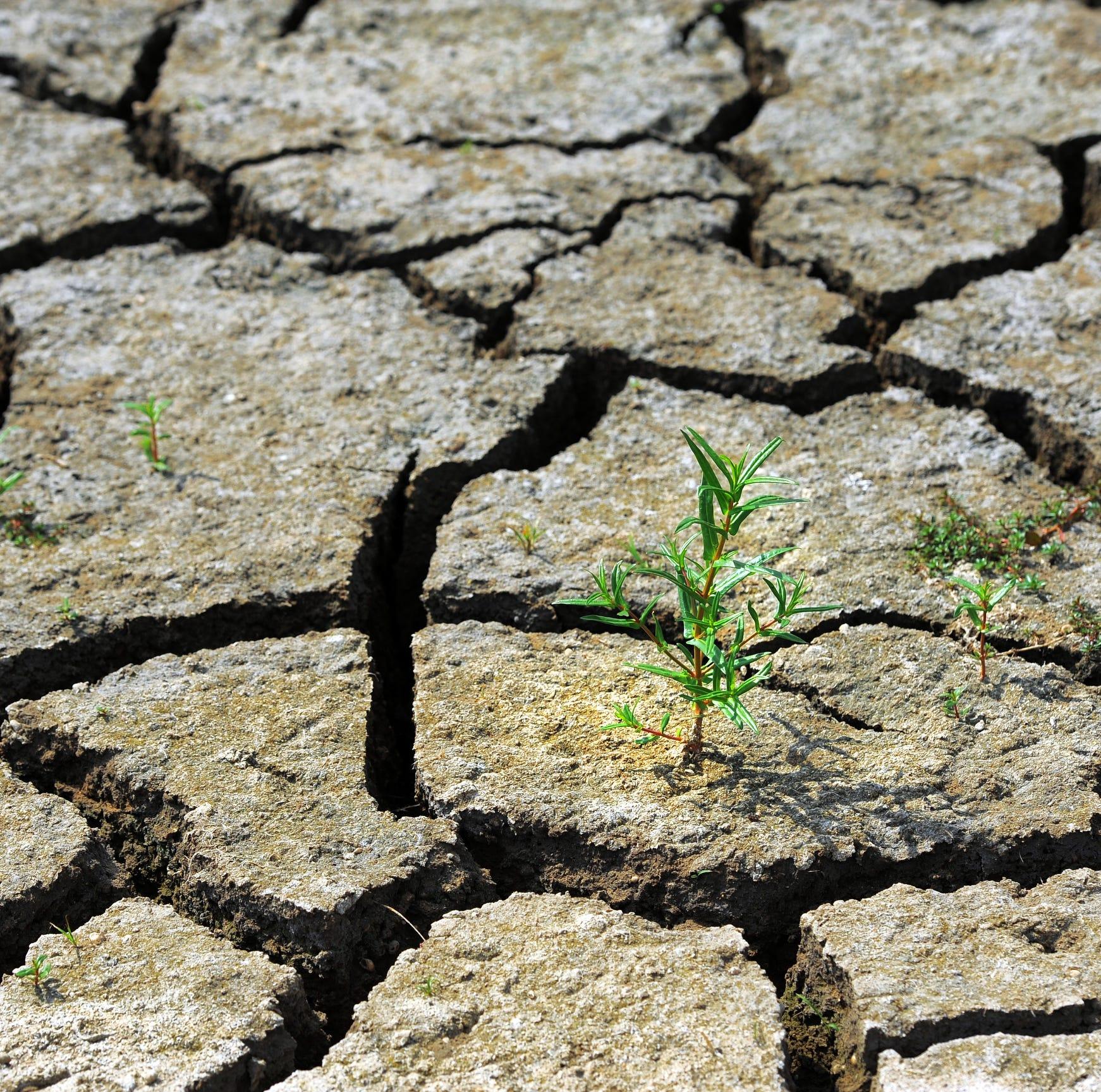 Bruce Kreitler: Take care when killing weeds