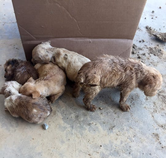 These puppies were abandoned at a car wash in Mississippi.