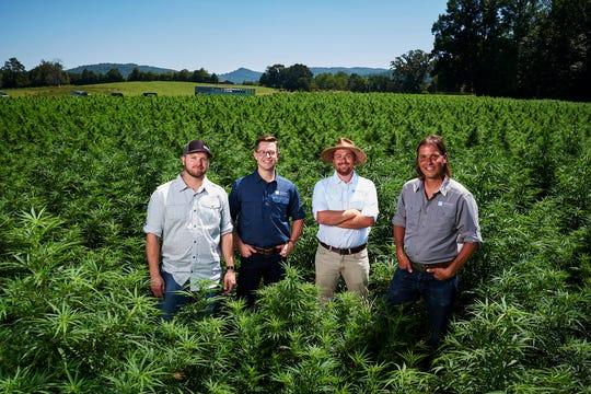 Knoxville's Bluhen Botanicals company is a leader in processing industrial hemp and extracting CBD oils, used for many medicinal purposes.